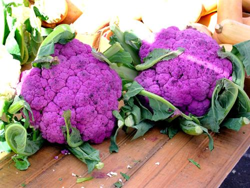 Purple Cauliflower1