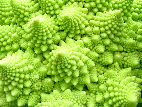 Romanesco Broccoli5