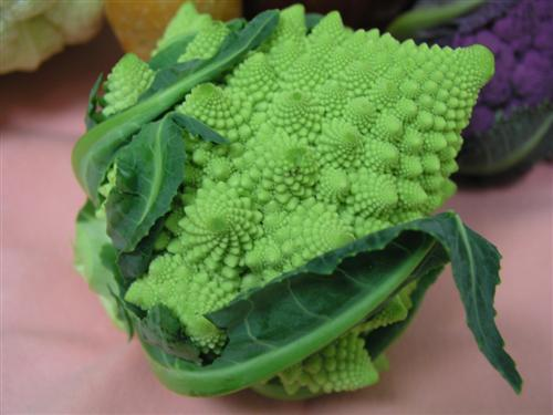 Romanesco Broccoli4